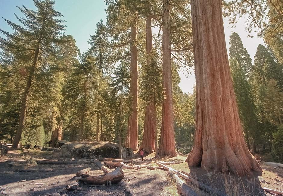 sequoia_big_trees_trail