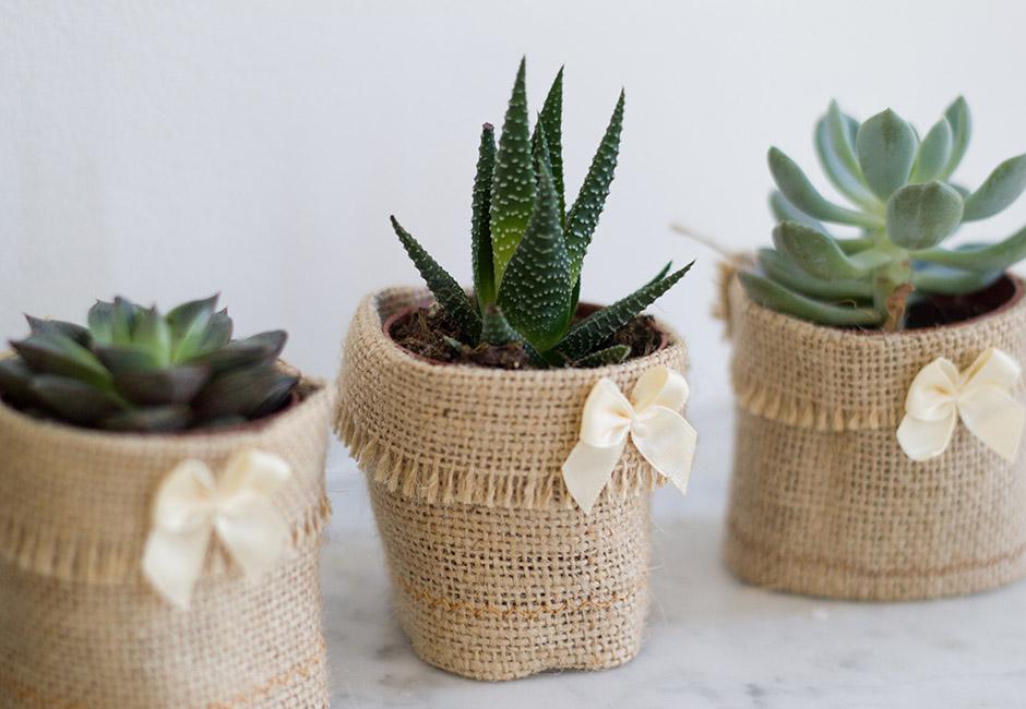 Mes cadeaux aux invit s du mariage samedi matin for Plantes acheter ligne